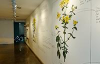 imagen de la sala Emilio Ellena donde se puede ver parte de la exposición de Lucas Nuñez Maleza en el jardín