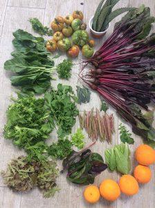 Imagen de diferentes vegetales del huerto de Fernanda